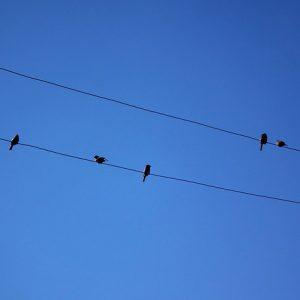 vogeltjes-online